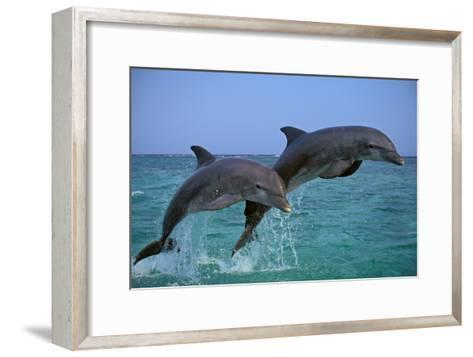 Two Bottlenosed Dolphins Jumping--Framed Art Print