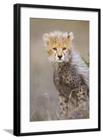Cheetah 10-12 Week Old Cub--Framed Art Print