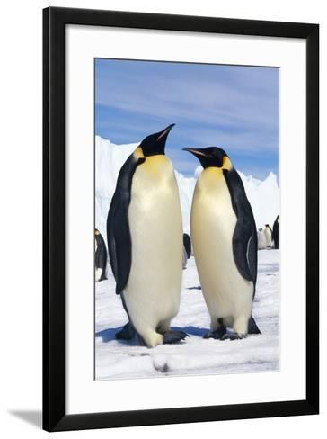 Emperor Penguins Pair--Framed Art Print