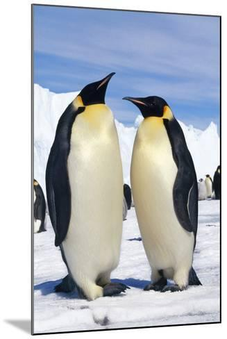 Emperor Penguins Pair--Mounted Photographic Print