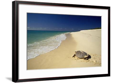 Hawksbill Turtle by Sea--Framed Art Print