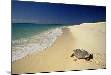 Hawksbill Turtle by Sea--Mounted Photographic Print