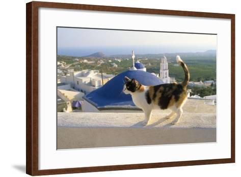 Cat,Tortoiseshell and White, Town in Background--Framed Art Print