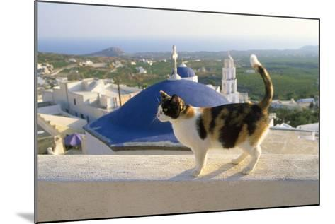 Cat,Tortoiseshell and White, Town in Background--Mounted Photographic Print