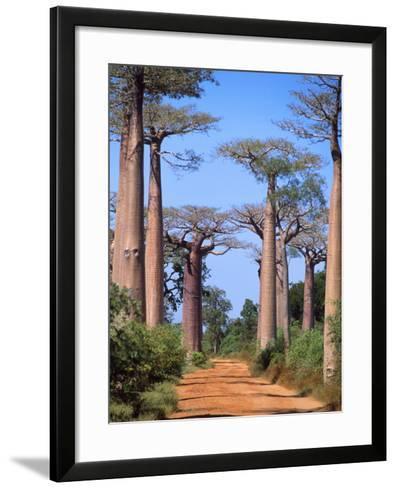 Boab Tree--Framed Art Print