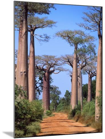 Boab Tree--Mounted Photographic Print