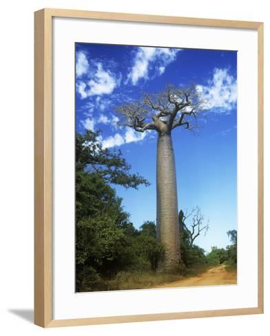 Baobab Tree--Framed Art Print