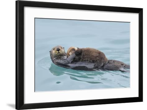 Alaskan Northern Sea Otter Mother Carrying--Framed Art Print