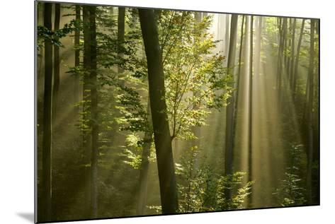 Mist in Forest Sunrays Breaking Through Autumn Forest--Mounted Photographic Print