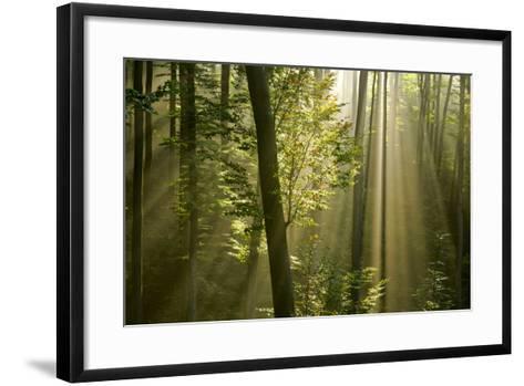 Mist in Forest Sunrays Breaking Through Autumn Forest--Framed Art Print