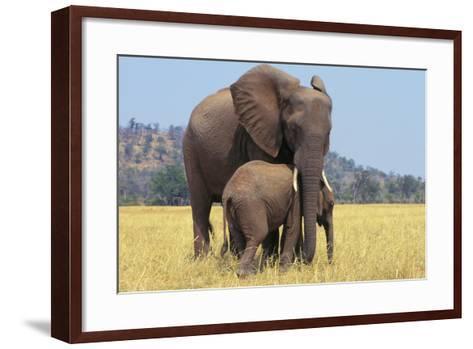 African Elephant Female, Cow with Young Calf--Framed Art Print