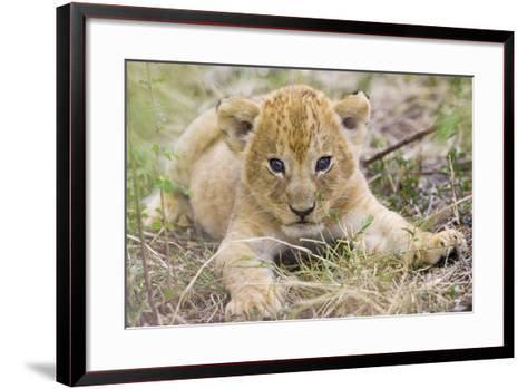 Lion 3-4 Week Old Cub--Framed Art Print