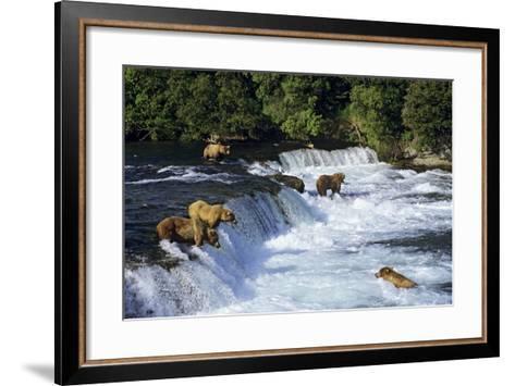Coastal Grizzlies or Alaskan Brown Bears Fishing--Framed Art Print