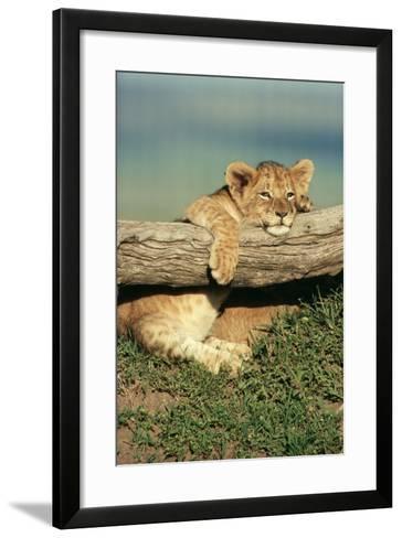 Lion Cub on Log--Framed Art Print