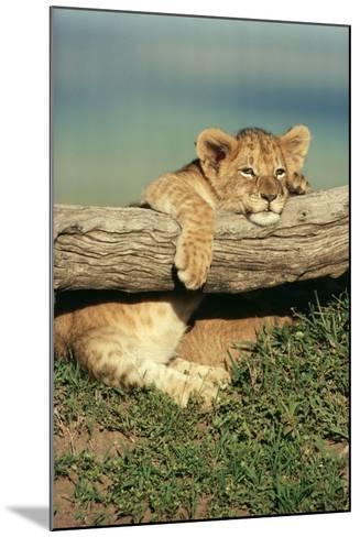 Lion Cub on Log--Mounted Photographic Print