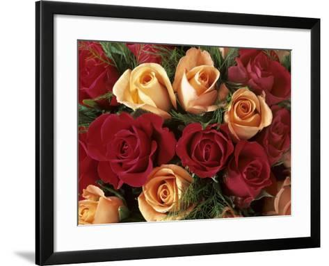 Bouquet of Roses with Light Pink and Read Blossoms--Framed Art Print