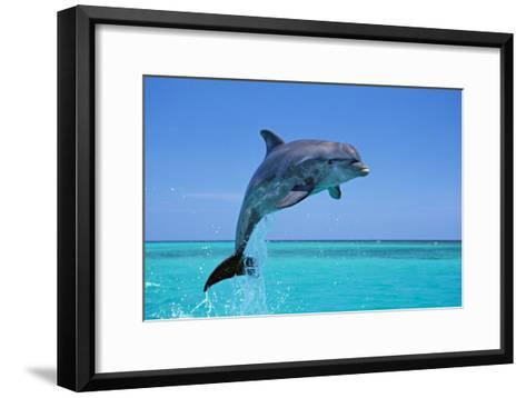 Bottlenosed Dolphin Leaping Out of Water--Framed Art Print