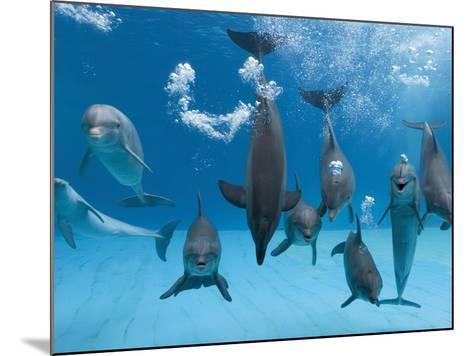 Bottlenose Dolphins Dancing and Blowing Air Underwater-Augusto Leandro Stanzani-Mounted Photographic Print