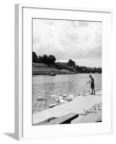 Feeding the Swans--Framed Art Print