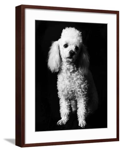 Poodle--Framed Art Print