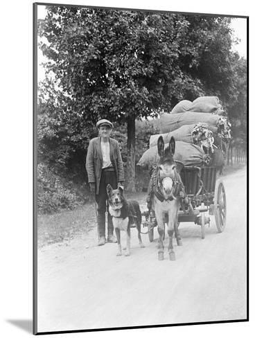 Dog and Donkey Team--Mounted Photographic Print