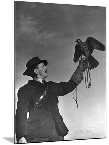 Falconry: Showing Off--Mounted Photographic Print