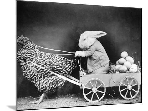 Rabbit in Hen Cart--Mounted Photographic Print