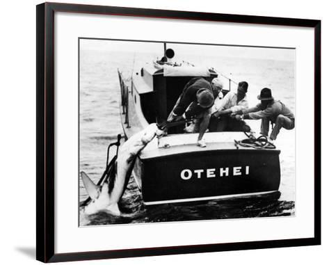 Swordfish Haul!--Framed Art Print