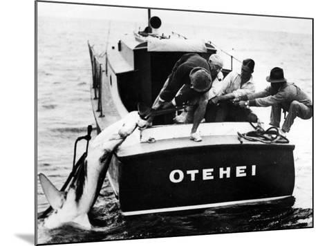 Swordfish Haul!--Mounted Photographic Print