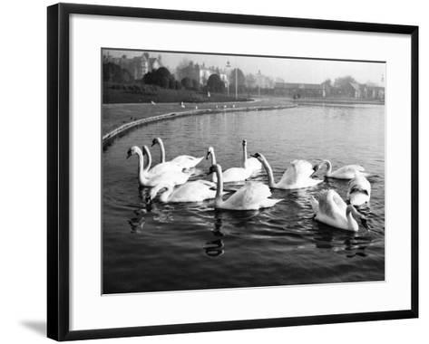 Swan Lake--Framed Art Print