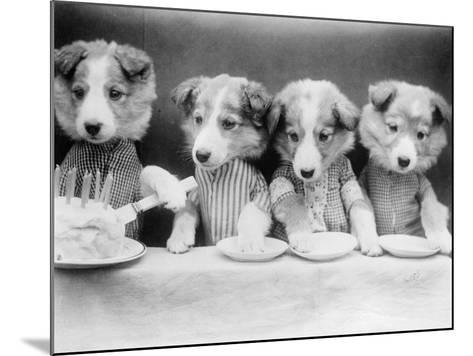 Dog's Birthday Party--Mounted Photographic Print