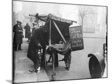 Pussy's Butcher--Mounted Photographic Print