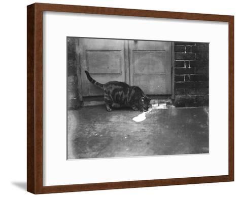 Cat Laps Up Spilt Milk--Framed Art Print