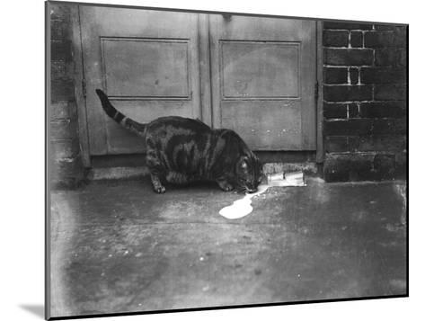 Cat Laps Up Spilt Milk--Mounted Photographic Print