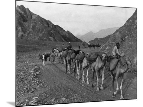 Camel Caravan--Mounted Photographic Print