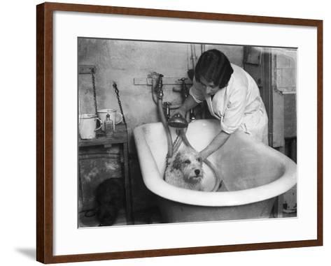 Bathing a Dog--Framed Art Print