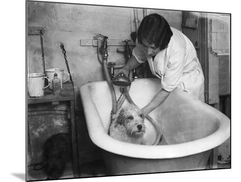 Bathing a Dog--Mounted Photographic Print