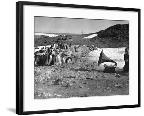 Penguins and Gramophone--Framed Art Print