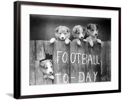 Dog Football Fans--Framed Art Print