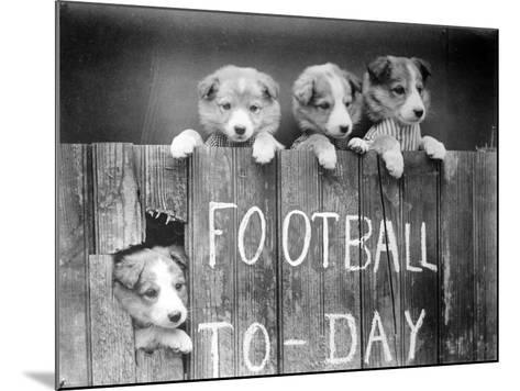 Dog Football Fans--Mounted Photographic Print