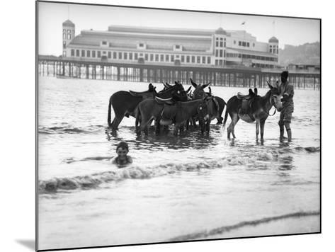 Donkeys in Sea--Mounted Photographic Print