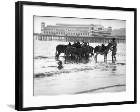 Donkeys in Sea--Framed Art Print