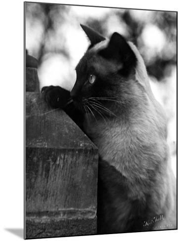 Inquisitive Siamese-Thomas Fall-Mounted Photographic Print
