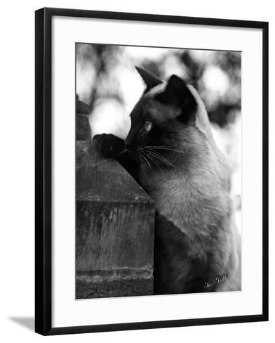 Inquisitive Siamese-Thomas Fall-Framed Art Print