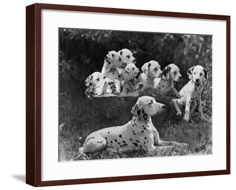 Postchaise Pluto One of Mrs Rowberry's Bitches with Her Puppies in a Basket-Thomas Fall-Framed Art Print