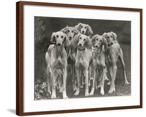 Group of Salukis Registered in Miss Doxford's First Litter by Sarona Kelb Ex Tazi of Ruritania Born-Thomas Fall-Framed Art Print
