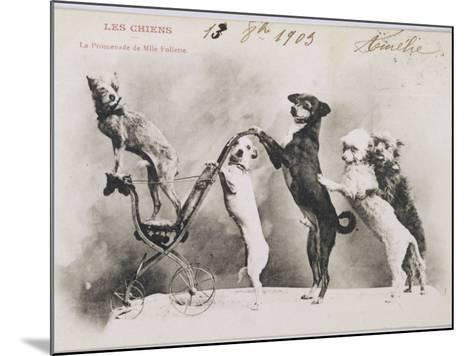 """""""La Promenade de Mademoiselle Follette"""", Four Dogs Take a Fifth for a Ride in a Pram- Like Vehicle--Mounted Photographic Print"""