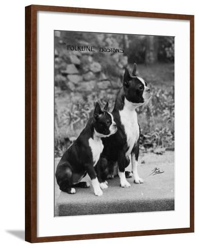 Champion Courtbarton Parlour Maid Owned by Pepper-Thomas Fall-Framed Art Print