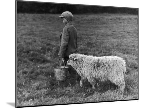 Little Boy Carring a Metal Pail of Feed is Followed by a Hungry Sheep!--Mounted Photographic Print