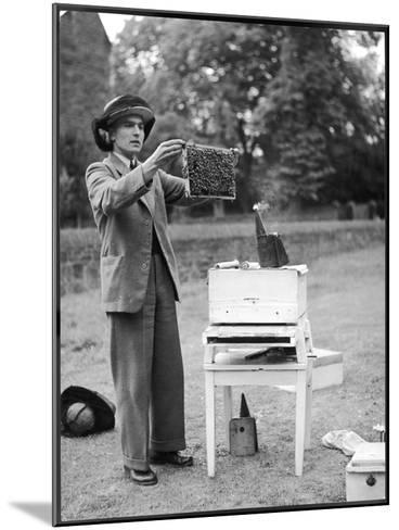 The Apiarist - a Bee Keeper Demonstrating the Examination of Frames of Brood--Mounted Photographic Print